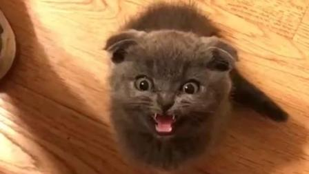 没见过这么凶的奶猫 是要把我吃了么