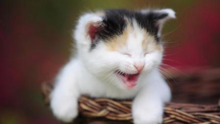 憋笑大作战: 猫咪也有犯二的时候, 看到第几只你笑尿了?