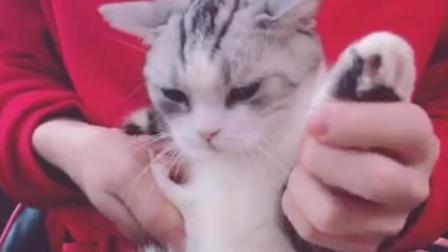小猫哔哩跳的海草舞, 一只猫比我跳的都要好
