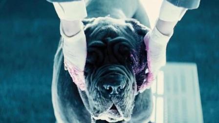 男子发明了一种面霜, 用狗做实验, 最后让狗大变样!