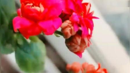 一首《好事样样在》祝福朋友们  健康平安时时来  幸福花朵天天开