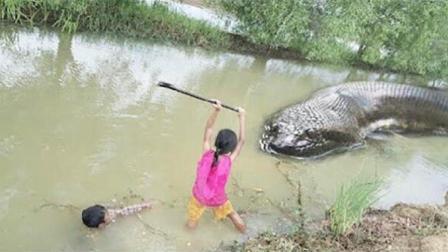 姐姐和弟弟田边钓鱼, 突然对岸杀出一条大蟒蛇, 结果悲剧了