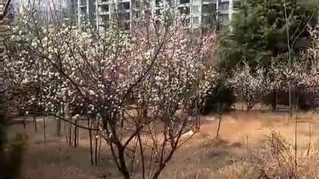 如此美景是大南阳哪里? 梅城公园吗?