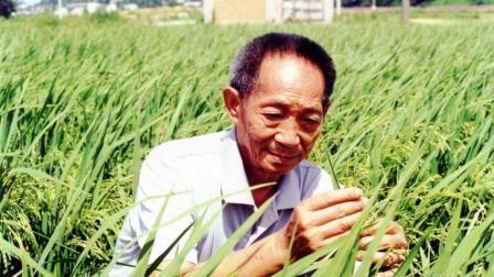 袁隆平的一个杂交水稻, 到底甩了欧美多少条街?