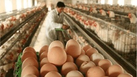 """鸡蛋价格重回""""3元时代"""", 专家预计下个月价格将这样发展..."""