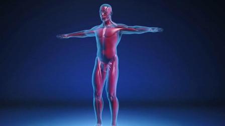 """科学家: 发现人类身体有""""新器官"""", 几乎遍布人体全身!"""