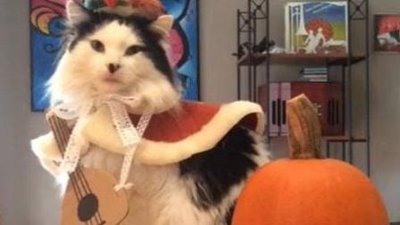 超级可爱的猫咪
