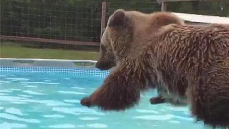 欢亿笑坊第五期 徐若丝推荐可爱熊各种搞笑