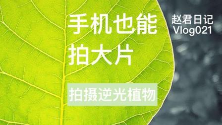 拍摄逆光植物\手机拍大片\赵君日记Vlog021