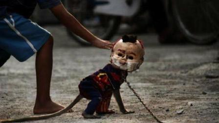 印度街头发现诡异小东西, 走近一看才知道有多残忍!