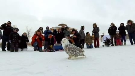 国外野生动物保护者全景记录猫头鹰放生过程
