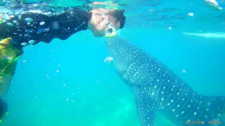菲律宾上山下海探险之旅【背包看世界】旅行纪录短片(Philippines)和鲸鲨一起游泳。