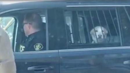 狗狗被捕入狱 只因为跟驯鹿打了一架