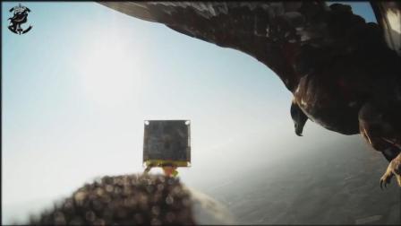 老鹰攻击螺旋翼无人机, 未来近距离侦查无人机的又一杀手