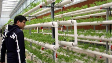 新型植物栽培方法火遍全球, 自家阳台、院子均可种植!