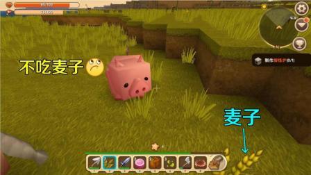 19迷你世界: 这只小猪可真挑食, 美味的麦子都不吃, 看来要饿它几天