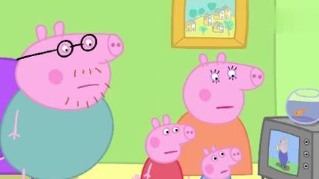 小猪佩奇: 兔先生打破了猪爸爸的世界记录, 猪爸爸很伤心!