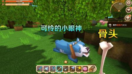 小乾迷你世界: 这只小狼嘴真馋, 用一根肉骨头就将它驯服了, 变成狗了
