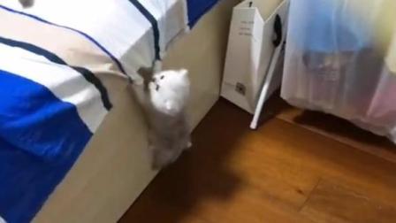 终于看到小猫咪是怎么爬上床的了! 好萌好可爱