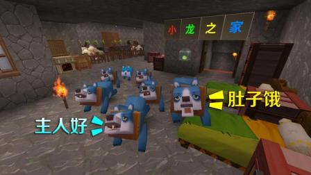 小乾迷你世界: 用传送卷轴运回了7只小狗, 它们都很听话, 而且很能吃