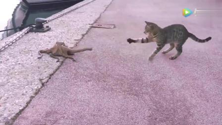 八爪鱼我只想上来晒晒太阳, 猫哥你就饶了我吧!