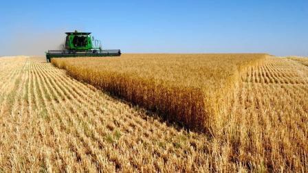 收割小麦的时候又到了, 怎么样才能提高亩产呢?
