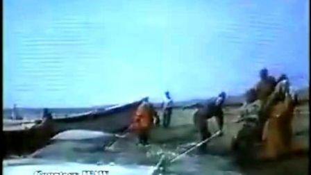 让白鲸回海洋与家人团聚