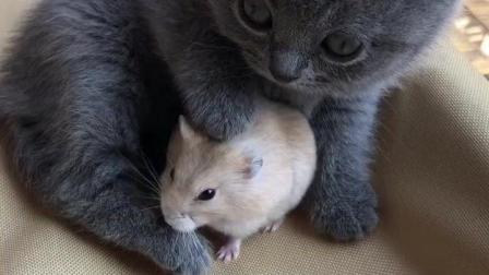 这小奶猫和小仓鼠真是要把人的心给萌化了, 太可爱了!