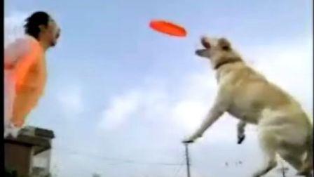 超级搞笑|狗狗|狗狗表演|搞笑动物|训狗|宠物21
