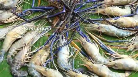 柬埔寨农村巧妇, 弄来一盘大虾, 看看她是什么吃法, 看着太馋人了