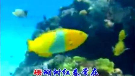 珊瑚颂  刘紫玲