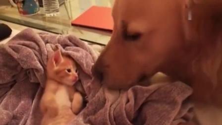 搞笑猫猫视频大合集, 小猫太可爱!