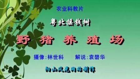 野猪养殖场(普通话解说)