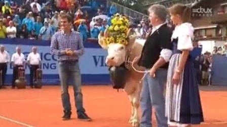 费德勒在瑞士Gstaad赛2013获赠奶牛Désirée仪式完整视频