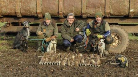 獵奇  第一百四十集  英国家庭气步枪灭鼠队的日常