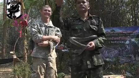 美军为适应亚热带丛林作战, 请泰国教官训练: 对付眼镜蛇的方法