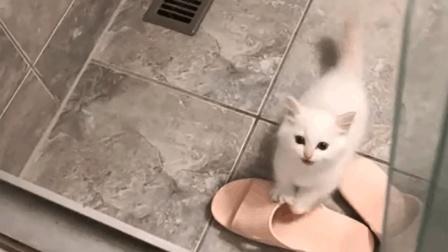 妹子只是洗个澡, 猫咪就一直担心的叫啊叫, 一定是真爱了