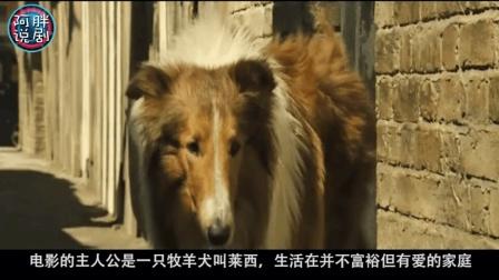 宠物狗经历长途跋涉, 终于回到主人身边, 请善待自己的狗狗