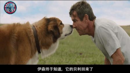 狗狗版的三生三世, 狗狗寻找自己的第一任主人, 相认时好感动