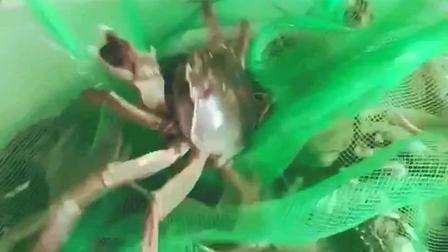 鲜活大闸蟹美食小吃, 这种海鲜, 到底要怎么煮才好吃呢
