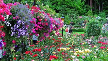 宝翠花园(布查德花园)下集~加拿大旅游系列(16)