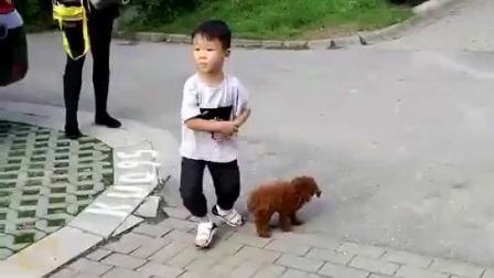 萌娃和狗, 你要哪个?