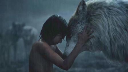 男孩被狼王养大, 七岁打死老虎, 还当上动物之王