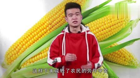 中国农民收玉米都是徒手掰, 看看美国农民的效率, 高出10万倍!