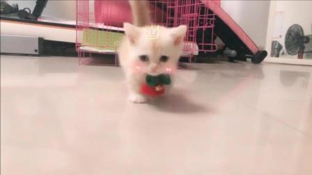 妹子冲小猫咪叫了一声, 小奶猫就过来啦, 好萌