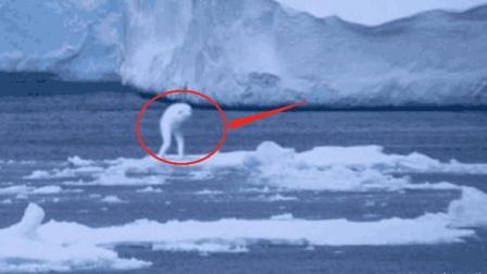 南极发现30米高怪物, 科学家都无法解释, 是外星文明还是新生物?
