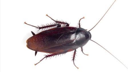 家里蟑螂太多? 在角落里放一杯它, 一夜死光光, 不知道的快看看