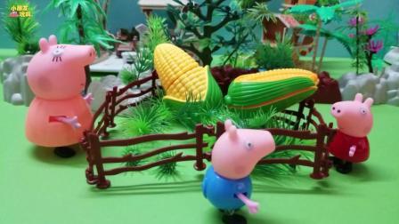 猪妈妈的菜园长了两个大玉米, 这玉米真的太大了!