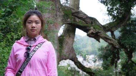 贵州农村女孩: 带你看价值连城的金丝楠木