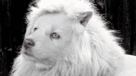 世界上最混食的犬种!